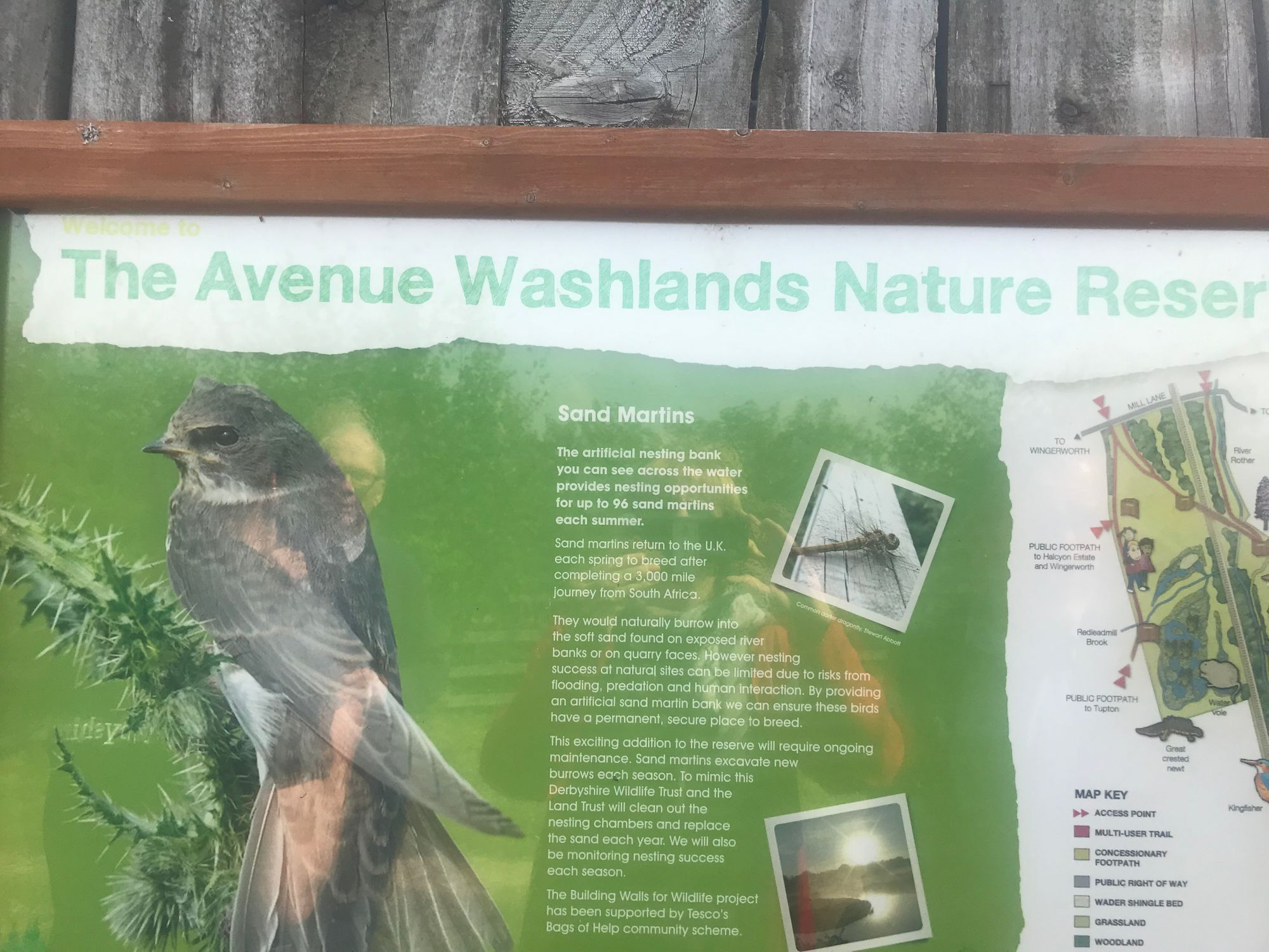 JOIN US - Family Fun Day 30th July - The Avenue Washlands Nature Reserve, Chesterfield